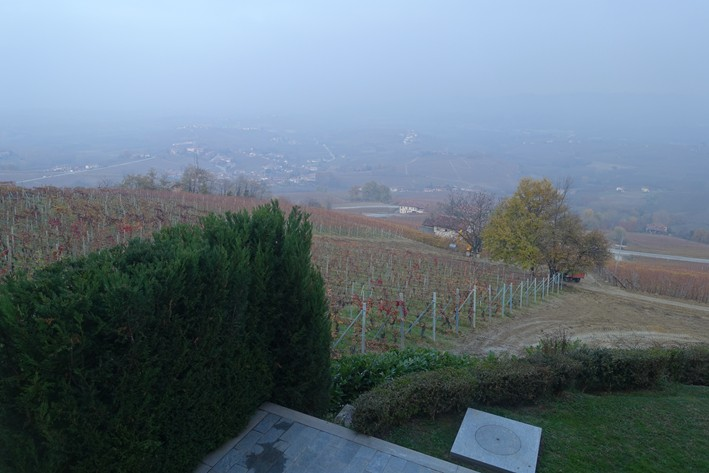 looking down over vineyard