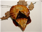 pigeon and duck liver pie