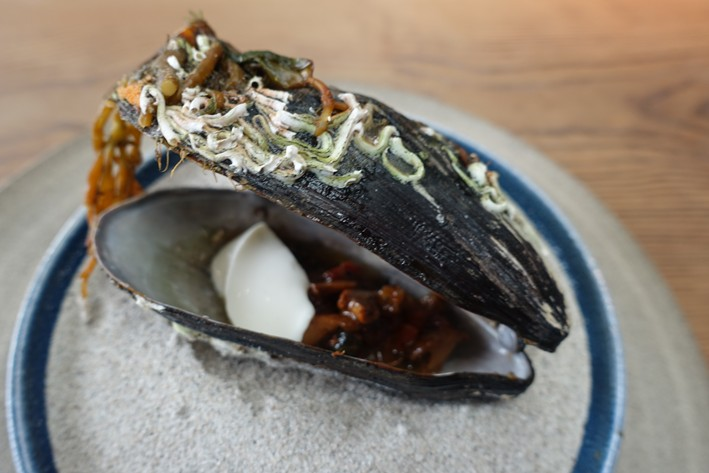 horse mussel with chanterelles