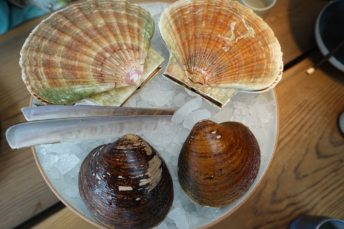 scallop and clam