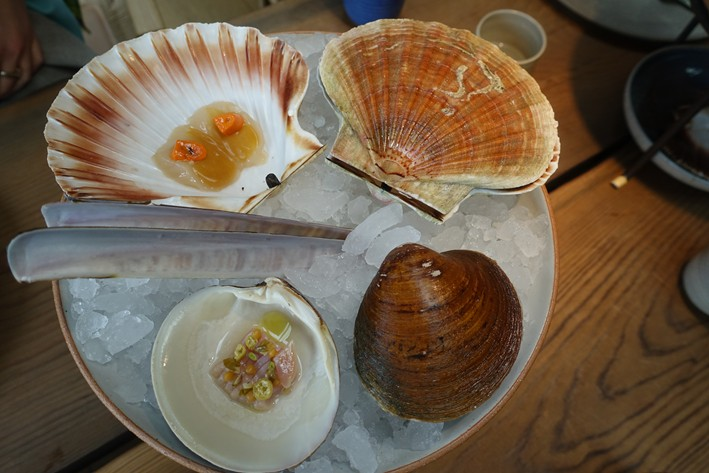 scallop and mahogony clam display