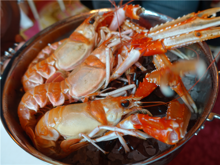 live Scottish langoustines
