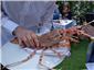 spiny lobster presented