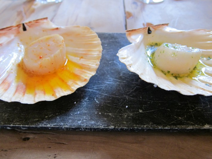 scallops in shell